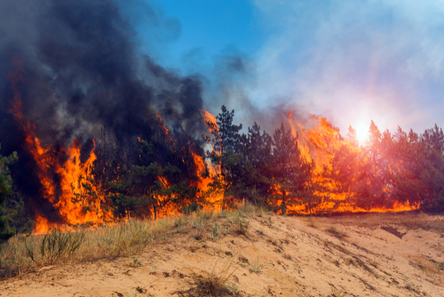 Wildfires and Wrongful Death