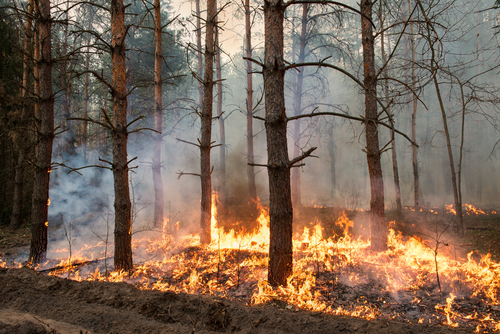 How are Injury Claims Handled After a Wildfire Caused By Negligence?